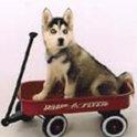 American Puppy Club Logo