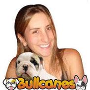Bullcanes Logo