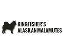 Kingfisher's Alaskan Malamutes Logo