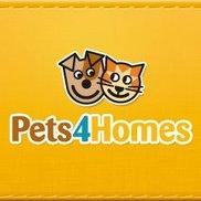Pets4Homes Logo