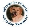 Neverest Labs Logo